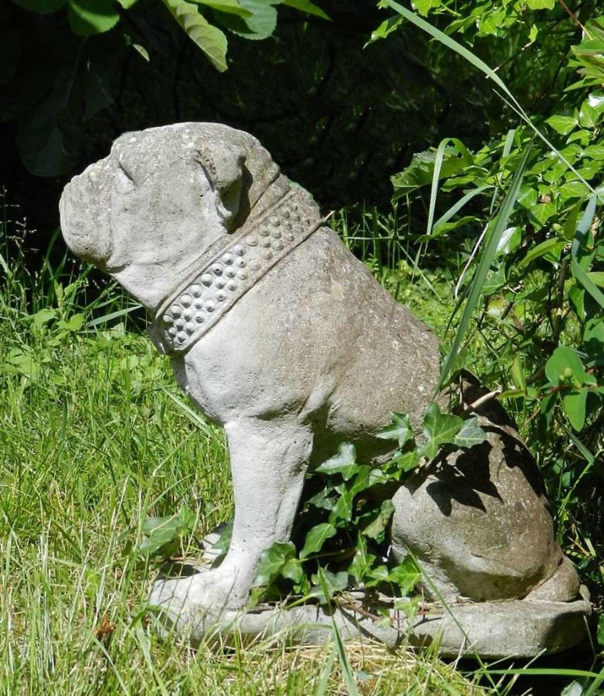 Handsome British Bulldog Garden Statue composite stone