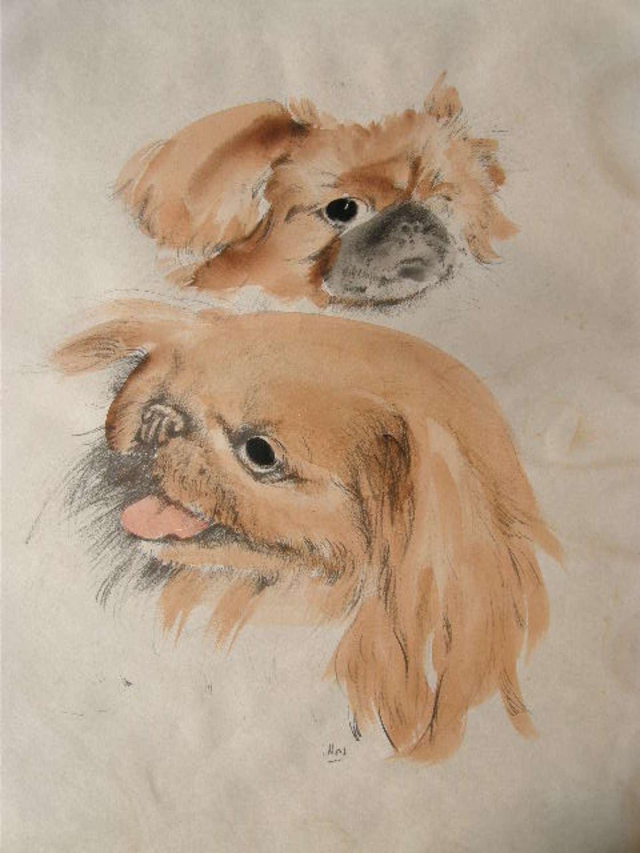 ORIGINAL WATERCOLOUR STUDY of PEKINGESE DOGS SIGNED